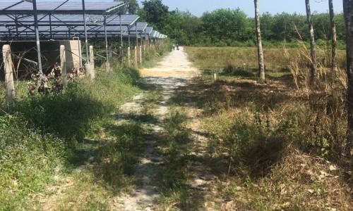 Cần bán sào Đất vườn tại dầu tiếng bình dương gần khu công nghiệp