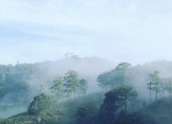 Đất nghỉ dưỡng 516m2 view săn mây, lựng tựa đồi thông giá 850 triệu tại Tp. Đà Lạt- Lâm Đồng.
