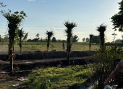 Cần Bán Đất Vườn Tại Bà Rịa Vũng Tàu.