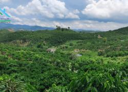 Đất Thôn 11 Đại Lào Bảo Lộc, 11.000 m², đường bê tông Ô Tô vào tân nơi.