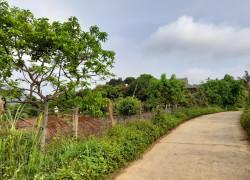 Cần bán gấp mảnh đất tiềm năng nhất Đông Sang, Mộc Châu