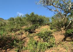 Lô đất gần 1000m2 - ngay mặt đường tỉnh lộ 102 - Giá rất rẻ để đầu tư