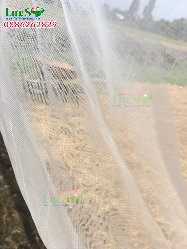 Hiệu quả của việc trùm lưới cho vườn táo