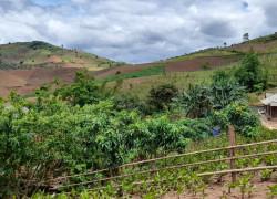 Bán mảnh đất khu vực Chiềng Sơn, Mộc Châu để xây dựng nông trại tới 10ha .