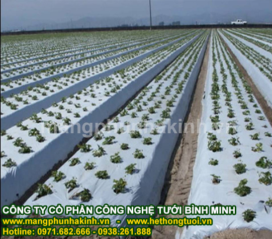 Phân phối màng phủ nông nghiệp cao cấp,màng phủ nông nghiệp Bình Minh,màng phủ nông nghiệp giá rẻ