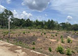 Bán đất nền dự án đồng tiến center đồng phú bình phước 1000m2