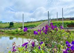 Đất Lộc Tân, Bảo Lộc, Lâm Đồng dt 242m2, giá 1ty890